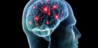 Human Head with Brain