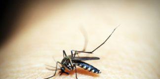 Mosquito, Malaria